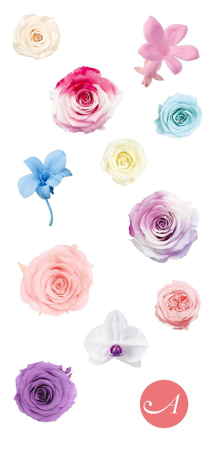 Preserved flower heads are the perfect wedding flower.  Made from freshly picked flowers and preserved to last as long as silk.  Create a wedding keepsake with preserved roses from Afloral.com.