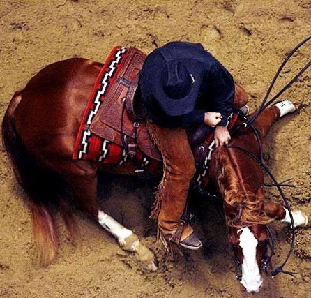 Cool View of a cutter from an overhead shot!! I love riding these horses!! They are awesome!