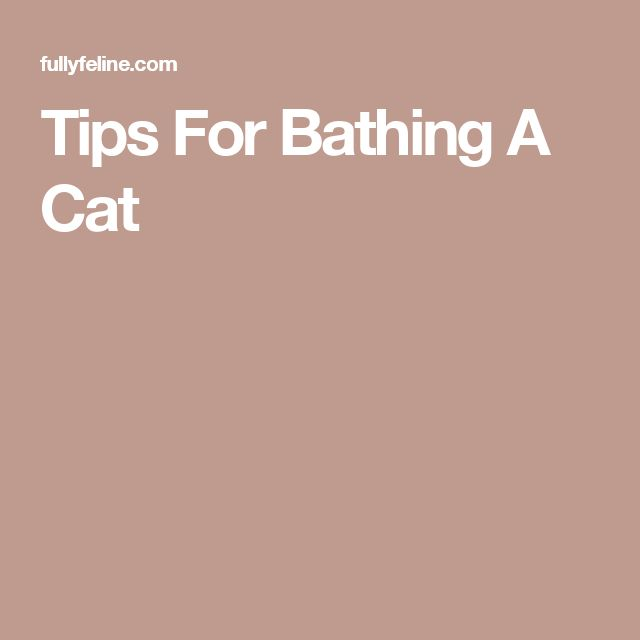 Tips For Bathing A Cat