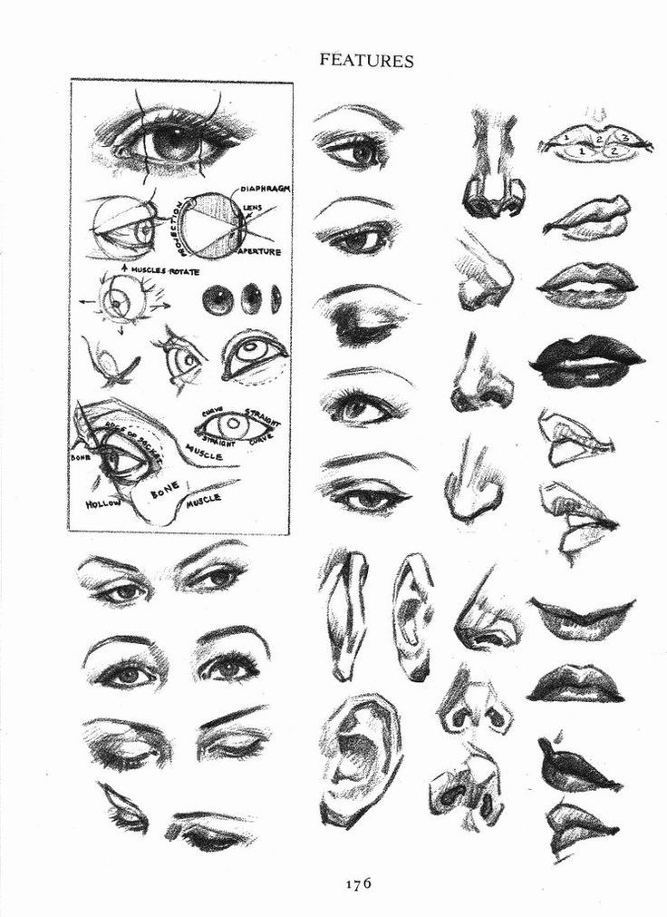 how to draw eyebrows step by step