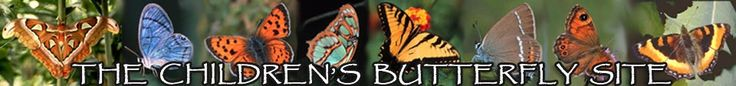 The Life Cycle of a Butterfly from The Children's Butterfly Site