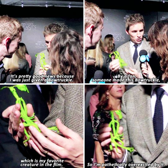 When he was given a handmade Bowtruckle at the premiere of Fantastic Beasts, and he geeked out over that too. | 23 Times Eddie Redmayne Was A Gift We Didn't Deserve