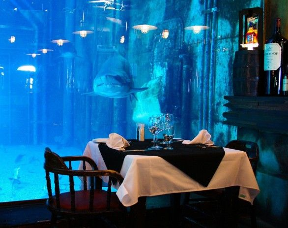 Dining with the sharks: Cargo Hold restaurant in Durban, South Africa