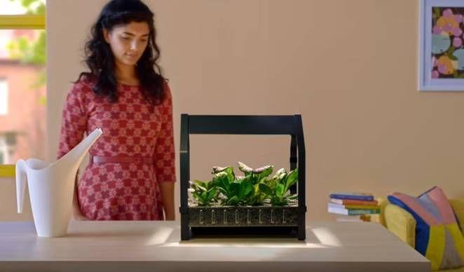 Countertop Hydroponics : ... introduce cute countertop hydroponic backyard kit Countertop Garden