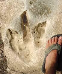 Dinosaur footprint stepping stones!