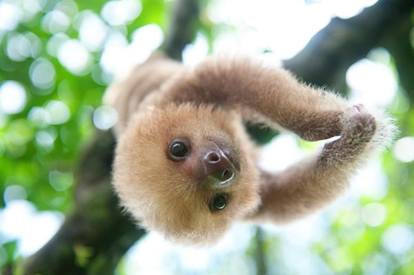 Sloth Love in Costa Rica| Organic Spa Magazine