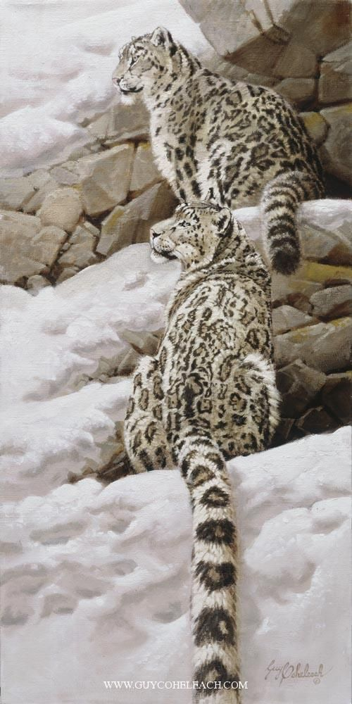 """Snow Leopards"".  Guy Coheleach."