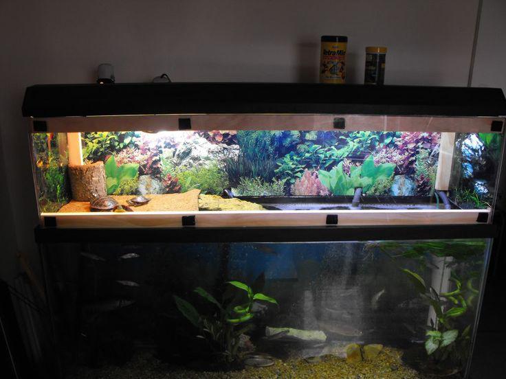 104 best images about turtle aquarium on pinterest for Fish tank turtles