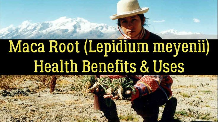 Maca Root (Lepidium Meyenii) - Health Benefits, Uses, Facts