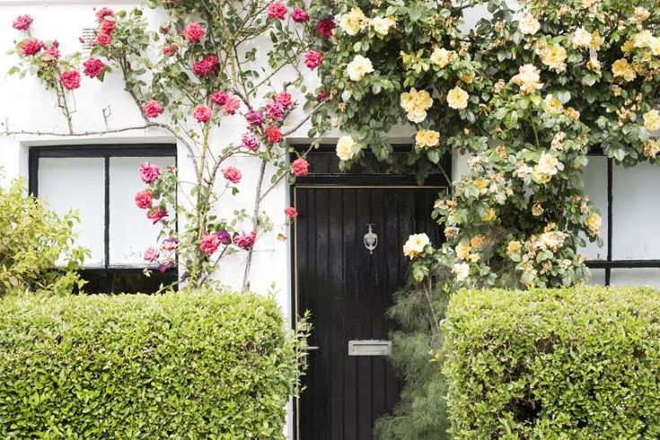 Cottage door with trailing red and yellow roses forming a decorative arch over…