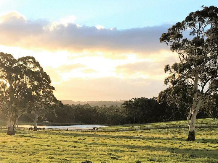 Ridgeport Chapel HIll  #SouthAustralia #ChapelHill #ForSale #HorseProperty #RealEstate