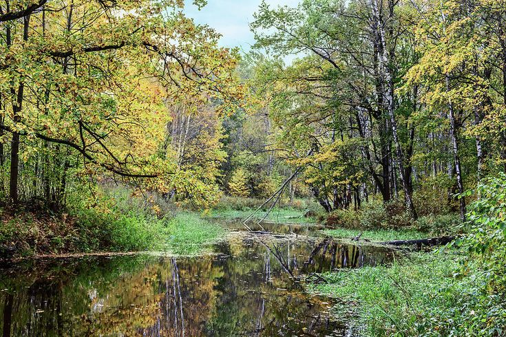George Westermak Photograph - Yellow Leaves Beautiful Autumn Forest Reflected In The Calm Water Of The Forest River by George Westermak #GeorgeWestermakFineArtPhotography #ArtForHome #FineArtPrints #travel #landscape #nature