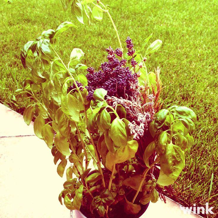 Poznáte blahodárne účinky ďateliny, skorocelu a čakanky na naše zdravie? http://wink.sk/beauty/zdravie/bylinky-burinky,-ktore-mozeme-zbierat.aspx