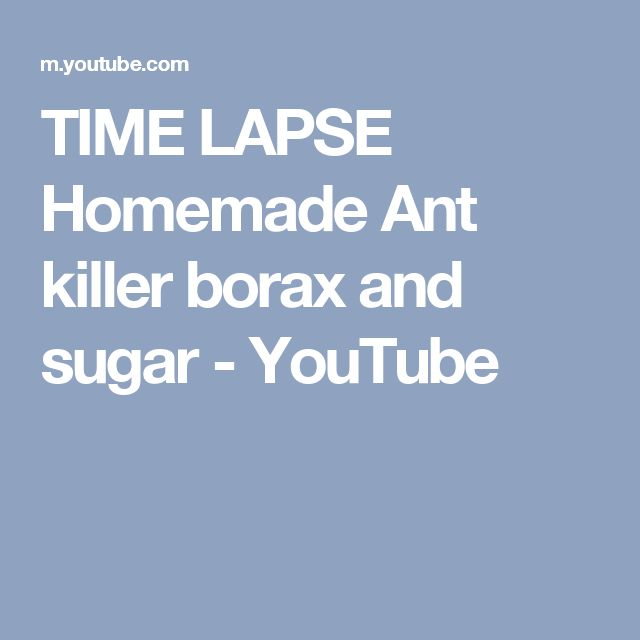 TIME LAPSE Homemade Ant killer borax and sugar - YouTube