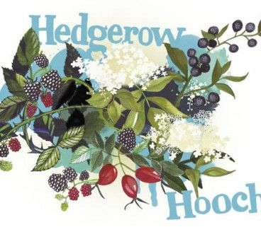 Hedgerow Hooch Branding Illustration, fonts and drawing