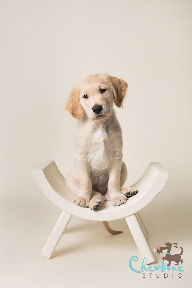 Planning an upcoming puppy portrait session? Here's some inspiration for you in this gallery by Chewbone Studios featuring our Bone and Baby Blue paper backdrops!