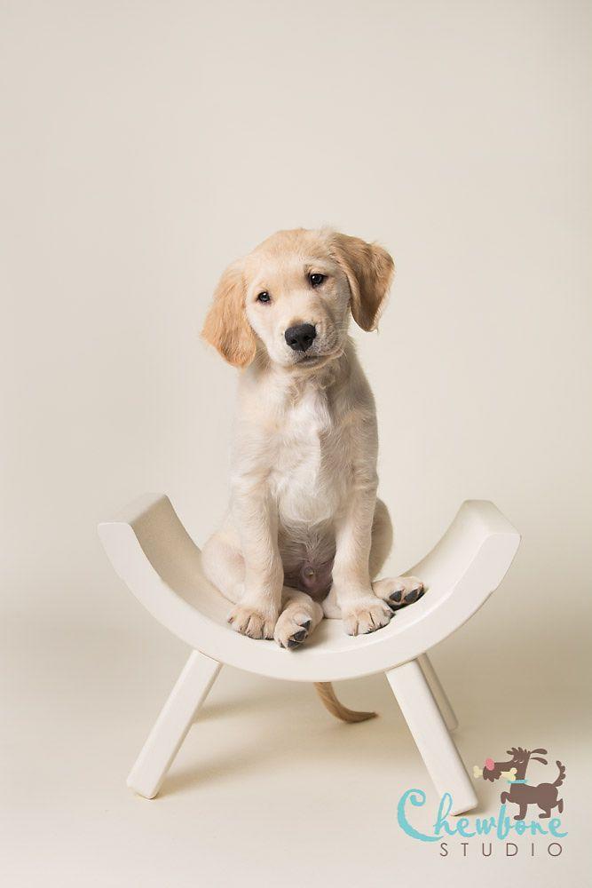 puppy portrait dog pinterest paper backdrop puppys