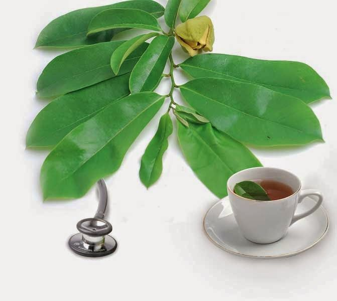 According to research conducted by experts from Purdue University (USA), revealed that the soursop leaves contains substances which are very good for the treatment of various diseases, especially cancer
