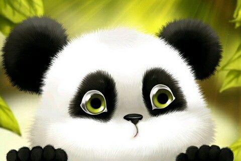 Pin by Tabitha Hester on Panda's Cute panda wallpaper