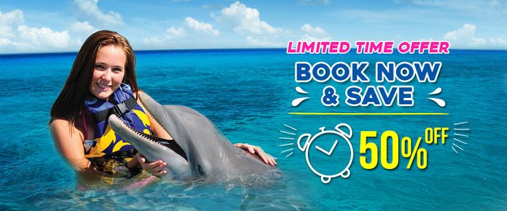 Dolphin Discovery Tortola: the place where you will have the experience of a lifetime! If you are coming to the BVI book your swim with dolphins adventure!