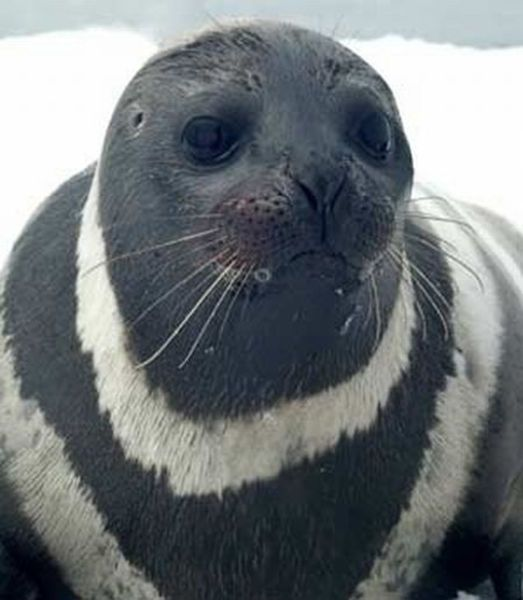Cute Ribbon Seals
