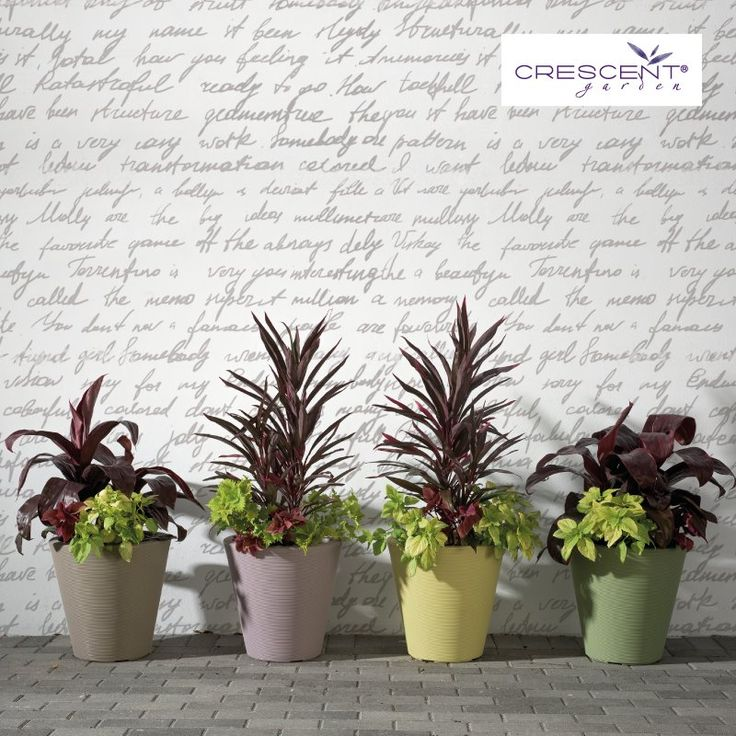 Did you know there are outdoor wallpapers now?  This is a great way to add texture to any wall.  Add some planters and you are ready to go. #madisonplanters #outdoorwallpaper