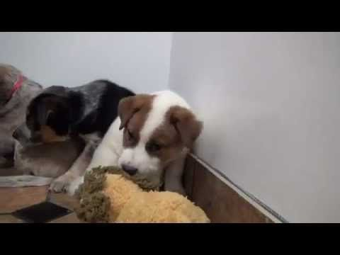 Man Keeps Promise to Dead Dog to Save Her Frightened Puppies. http://youtu.be/jv7071Yas20