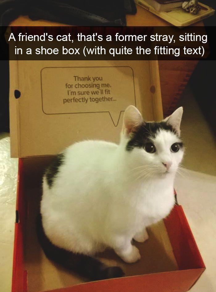 Klicken Sie hier, um zu sehen, wie witzig unsere Kätzchen sein können, wenn Sie Snapchat in