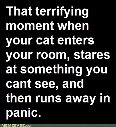 this is true!!Laugh, Quotes, Crazy Cat, So True, Funny Stuff, Humor, Things, Kitty, Animal
