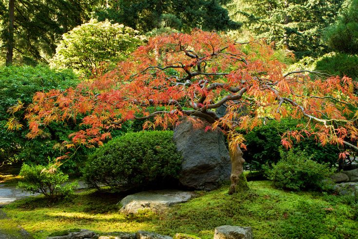 30 best images about modern backyard on pinterest for Japanese garden plants and trees