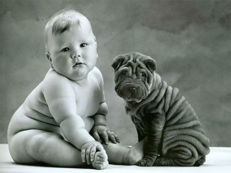 Look at all those rolls!Anne Geddes, Shar Pei, Baby Needs, Sharpei, Baby Dogs, Kids, Rolls, Baby Puppies, Animal