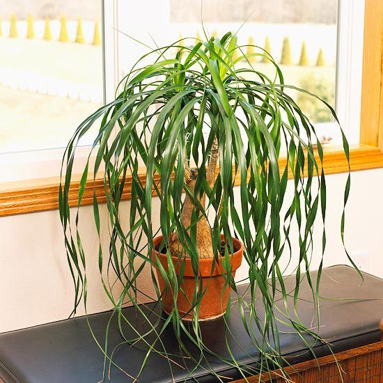 Houseplants for the forgetful gardener palms houseplant Tall narrow indoor plants