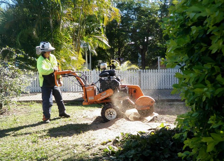 Stump Grinding & Removal Northern Beaches, North Shore