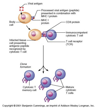 50 best study images on pinterest health human anatomy and exam 3 review chapter 21 antibody mediated immunity physiologybiology anatomyimmune systemanatomy referenceap biology publicscrutiny Choice Image