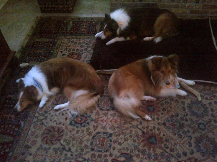 Boys Club! Saturday activity: Napping