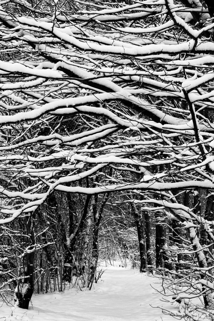 In the dark mid winter when frosty winds do moan