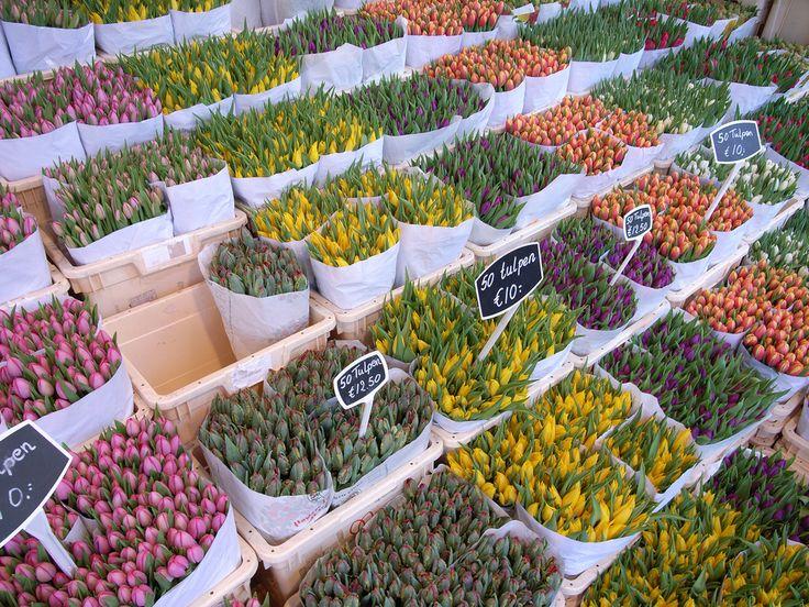 Tulipes au #marché aux fleurs d'#Amsterdam. #Hollande #PaysBas