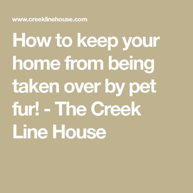 How to keep your home from being taken over by pet fur! - The Creek Line House