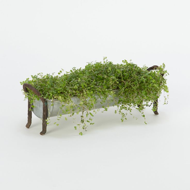 Galvanized Windowsill Tray. Indoor GardeningContainer GardeningIndoor Pots  ...
