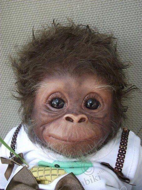 Adorable Baby: Baby Monkey, Cute Baby, So Cute, Pet, Cuti, Babymonkey, Baby Animal, Smile, Socute