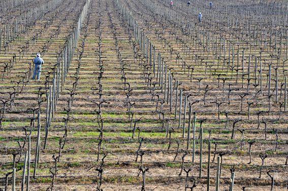 Limari Valley Vineyards