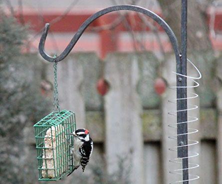 slinky keeps squirrels off bird feeder