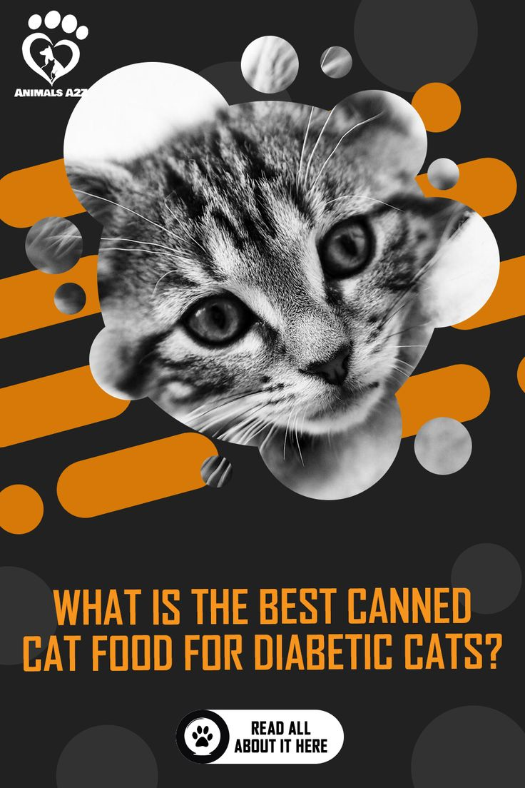 What is the Best Canned Cat Food for Diabetic Cats