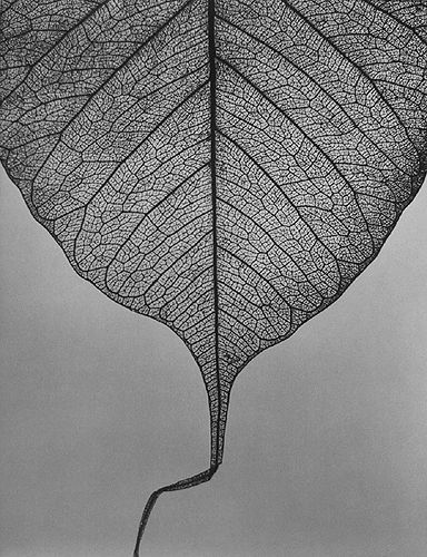 the intricacy in a common leaf