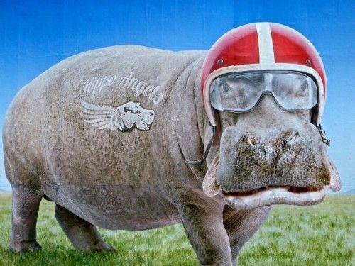 affiche Virgin humour Hippo--Hippo Angels, l'hippopotame rocker, affiche de virgin Mobil