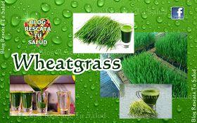 RESCATA TU SALUD: Wheatgrass (Zumo de pasto de trigo): ALIADO A LA DESINTOXICACIÓN, A LA SALUD Y AL TRATAMIENTO DE ENFERMEDADES.