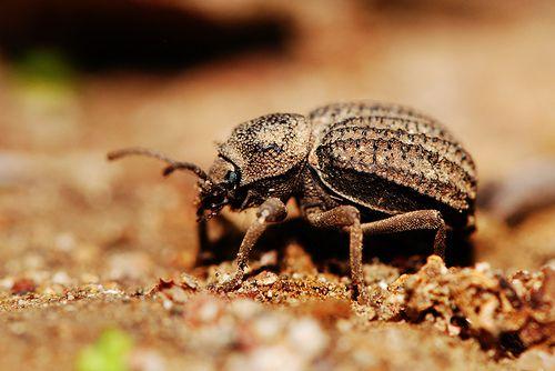 Bug - Macro Fotography