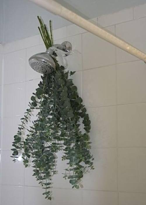 Pour un parfum agréable dans la douche, accrochez de l'ecalyptus.