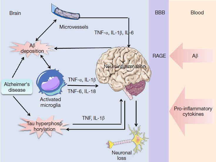 Role of pro inflammatory cytokines released from microglia in role of pro inflammatory cytokines released from microglia in alzheimers disease wang annals of translational medicine alzheimers disease fandeluxe Image collections