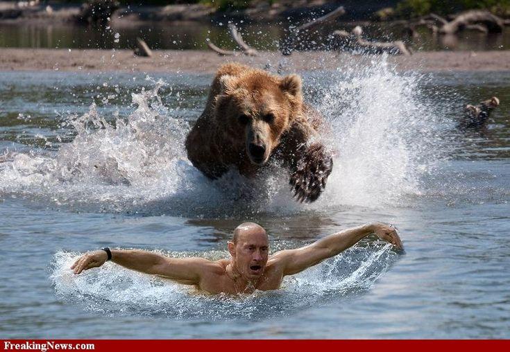 Vladimir Poutine a rencontrer son homme..son ours! - Fun: